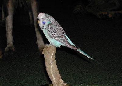 Foreign Birds 054