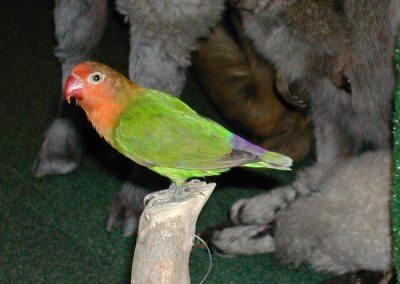 Foreign Birds 055