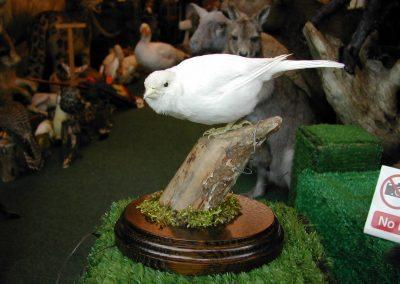 Foreign Birds 056