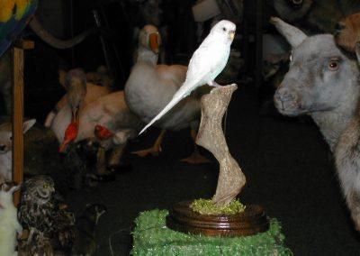 Foreign Birds 058