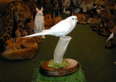 Foreign Birds 061