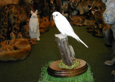 Foreign Birds 062