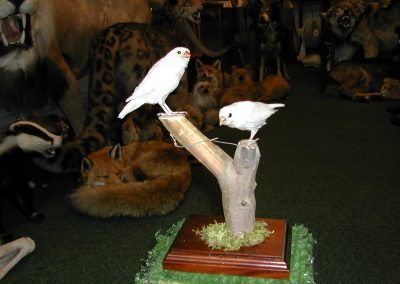 Foreign Birds 063