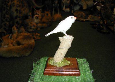 Foreign Birds 064
