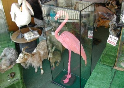 Foreign Birds 068