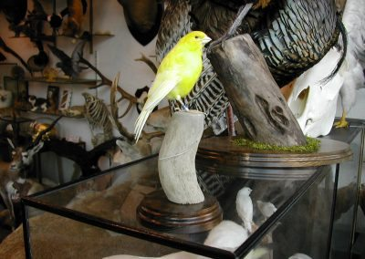 Foreign Birds 072