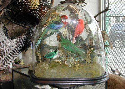 Foreign Birds 073