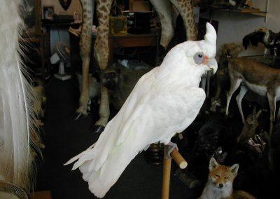 Foreign Birds 078