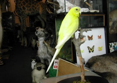Foreign Birds 079