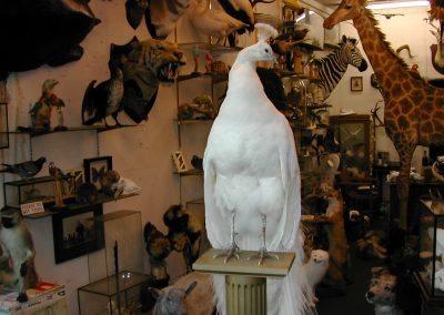 Foreign Birds 082