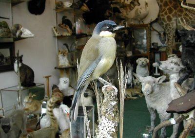 Foreign Birds 086