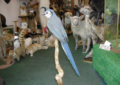 Foreign Birds 087
