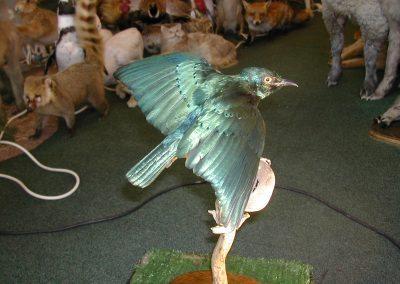 Foreign Birds 088
