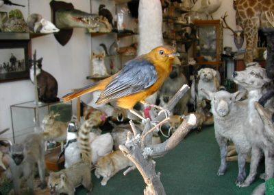 Foreign Birds 089