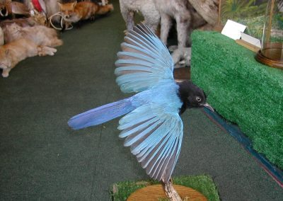 Foreign Birds 090