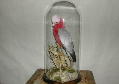 Foreign Birds 093