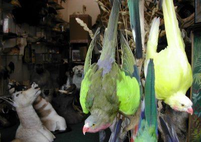 Foreign Birds 095