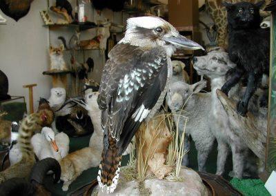 Foreign Birds 098