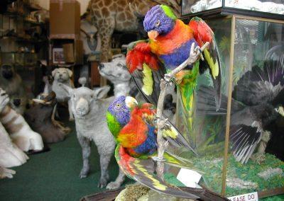 Foreign Birds 100