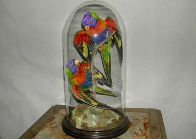 Foreign Birds 101