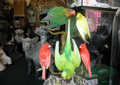 Foreign Birds 102