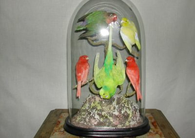 Foreign Birds 103