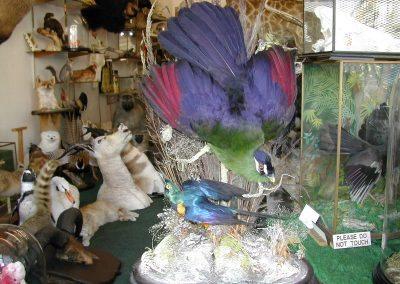 Foreign Birds 104