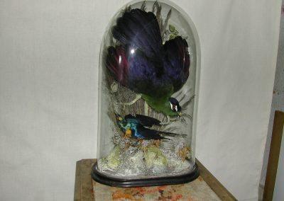 Foreign Birds 105
