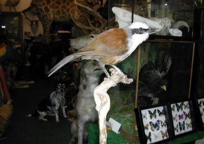 Foreign Birds 110