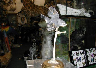 Foreign Birds 112