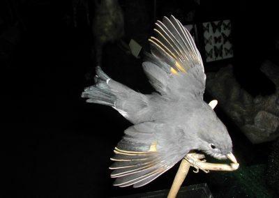 Foreign Birds 113