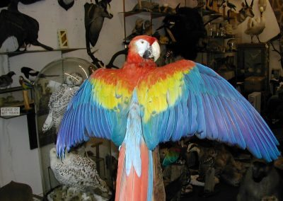 Foreign Birds 115