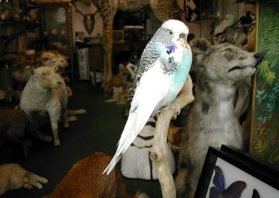 Foreign Birds 118