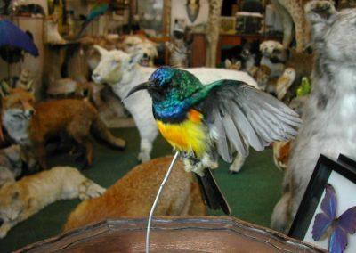 Foreign Birds 119