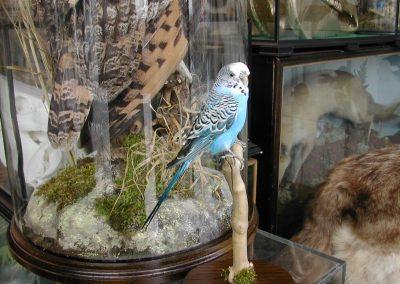 Foreign Birds 121