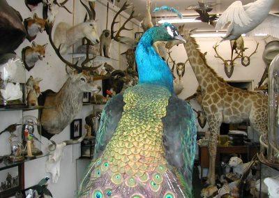 Foreign Birds 126