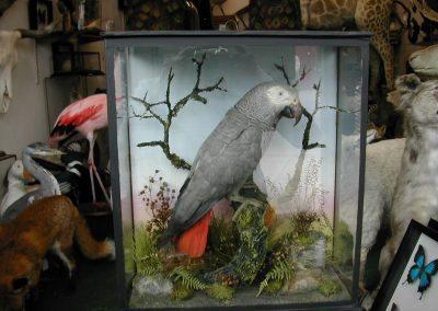 Foreign Birds 128