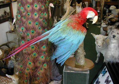 Foreign Birds 134