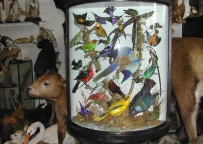 Foreign Birds 135