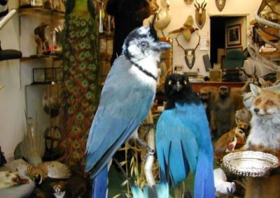 Foreign Birds 144