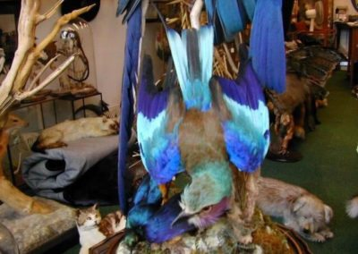 Foreign Birds 145