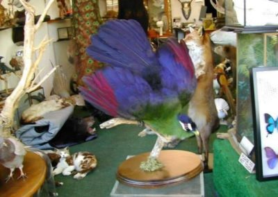 Foreign Birds 148