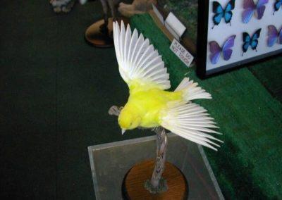 Foreign Birds 149