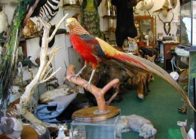 Foreign Birds 150