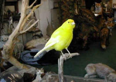 Foreign Birds 151