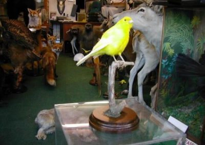 Foreign Birds 153