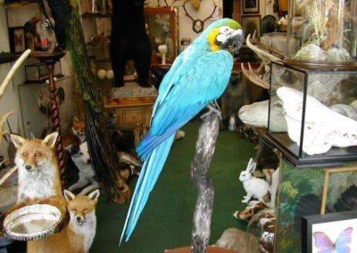 Foreign Birds 154