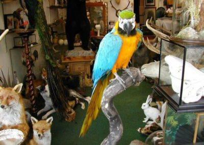 Foreign Birds 155