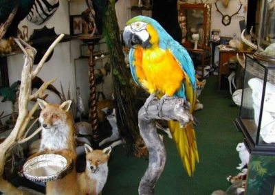 Foreign Birds 156