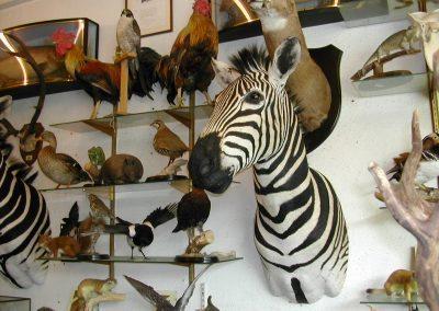 Foreign Mammals 001
